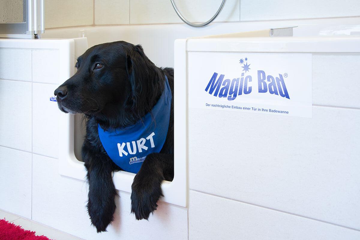 Kurt ist der Hund bei Installateur Marvan und testet hier den Einstieg in eine der Duschen.